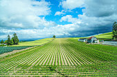 Green nature landscape background of field with blue cloudy sky