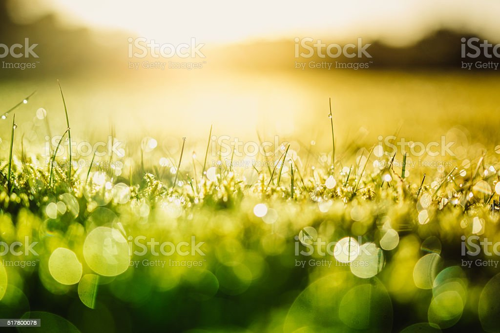 Green nature stock photo