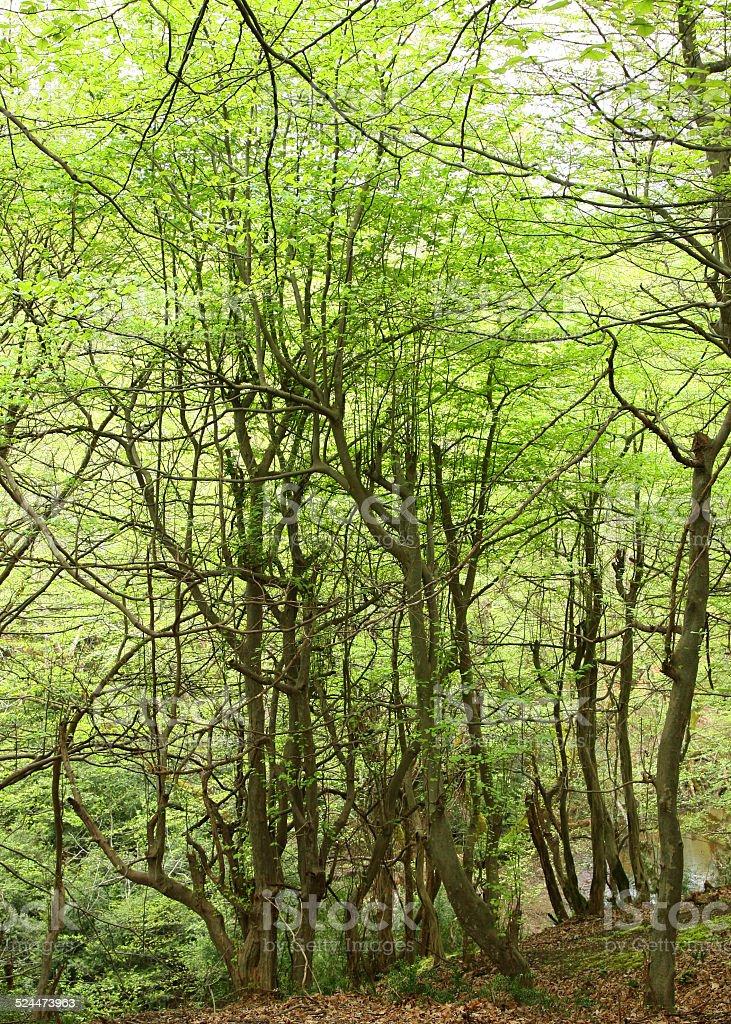 Vert nature photo libre de droits