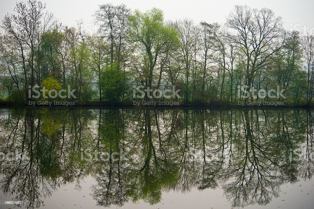 Green Nature Trees perfet mirroring stock photo