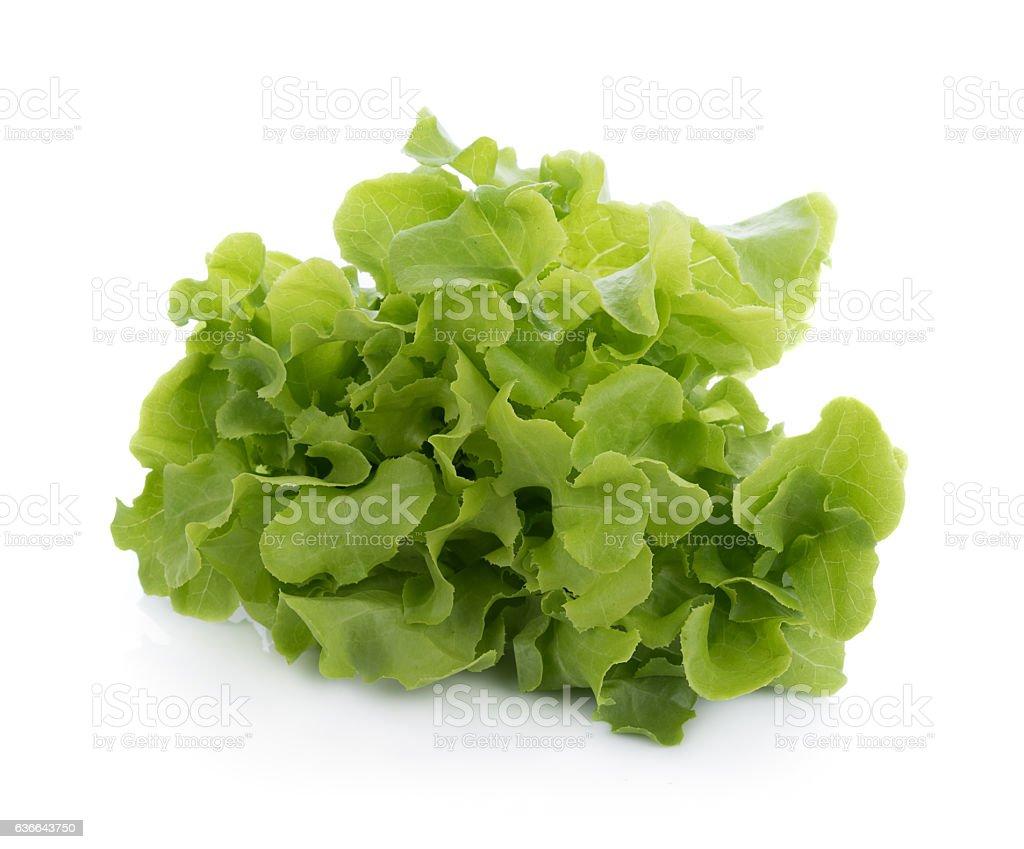 Green oak lettuce isolated on white background stock photo