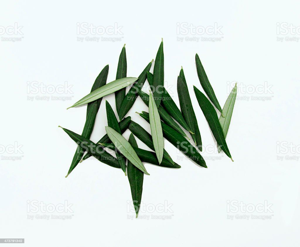 Green Olive  Leaves stock photo