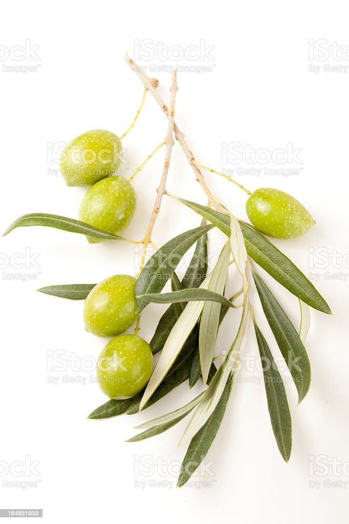 Green olives branches with leaves stock photo