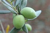 green olives close-up