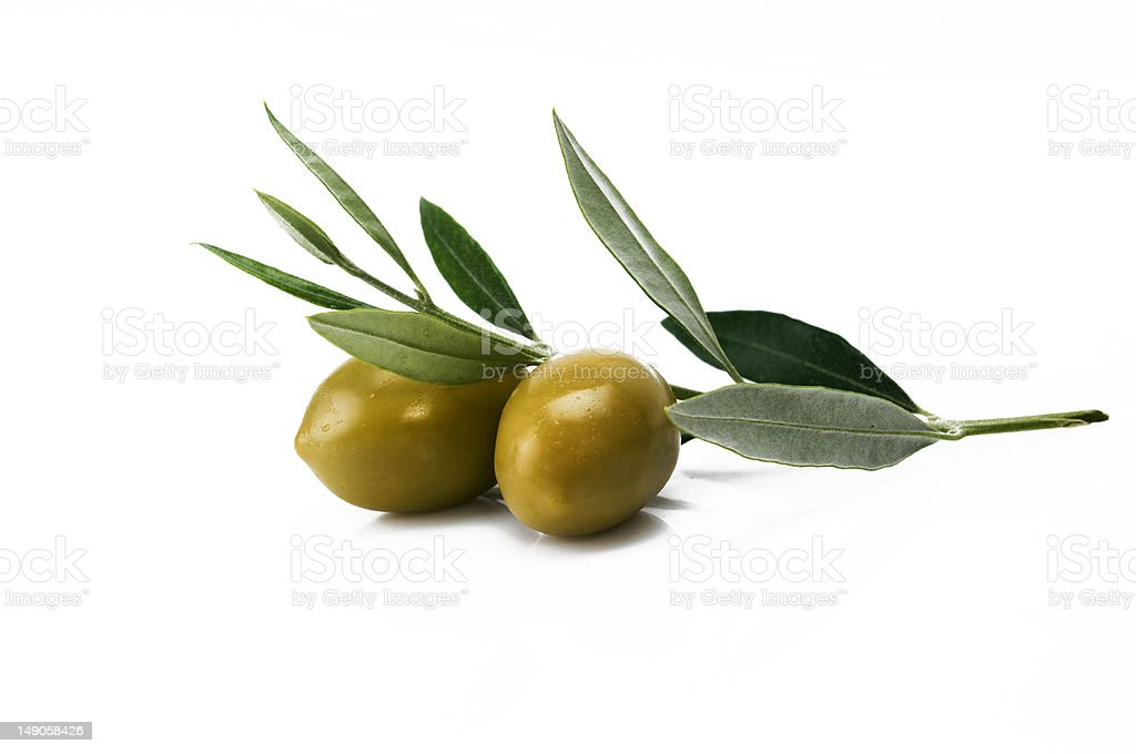 Green olives on a branch isolated on white stock photo