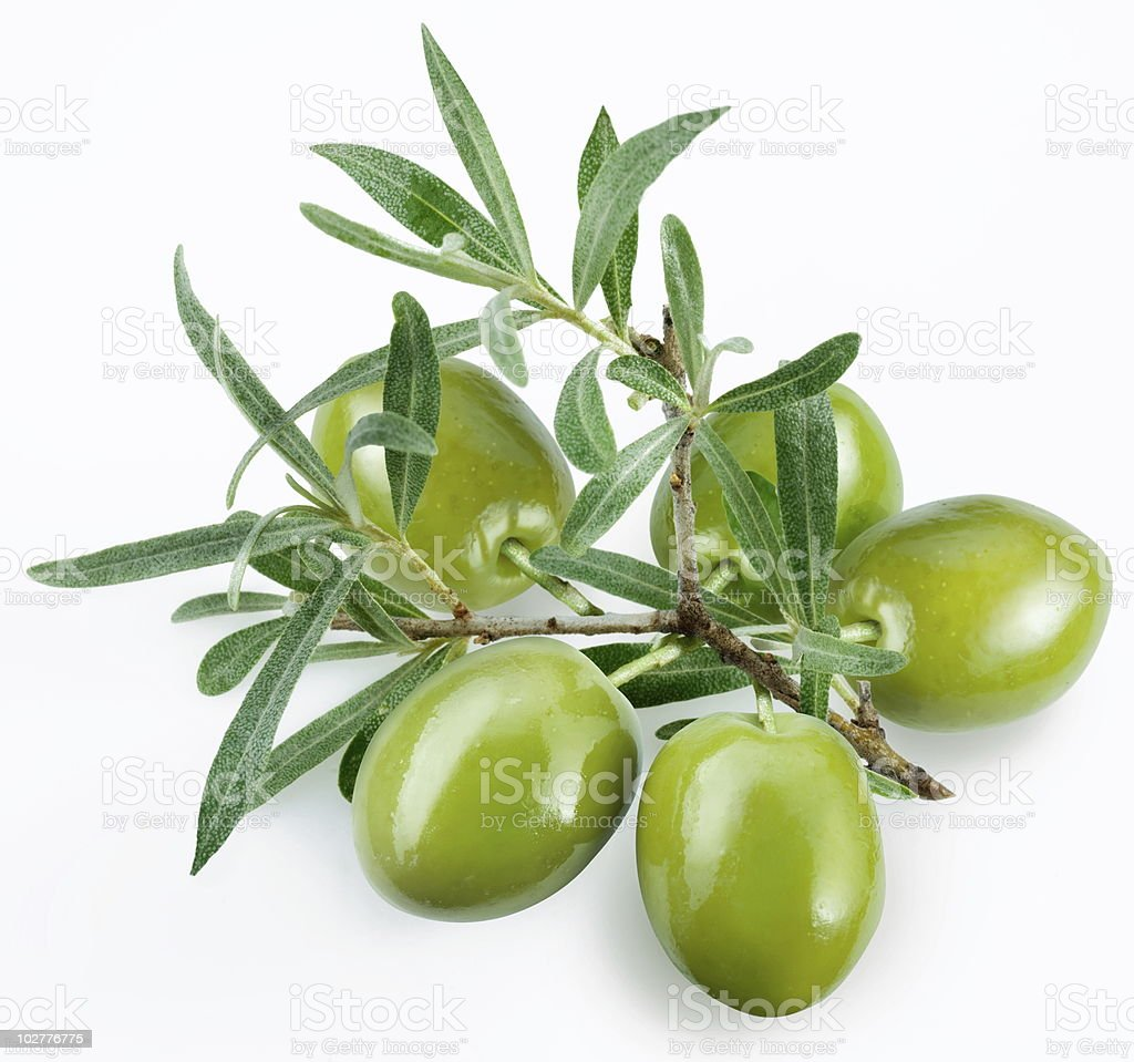 Green olives on the branch stock photo