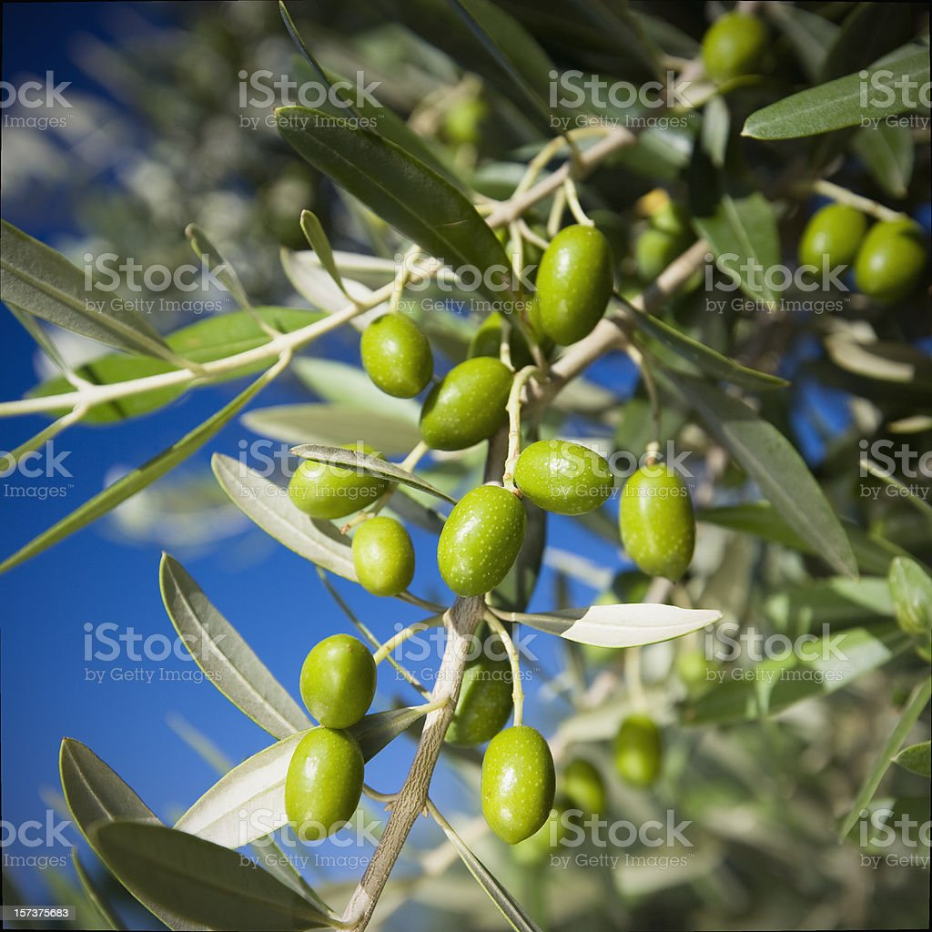 Green olives royalty-free stock photo