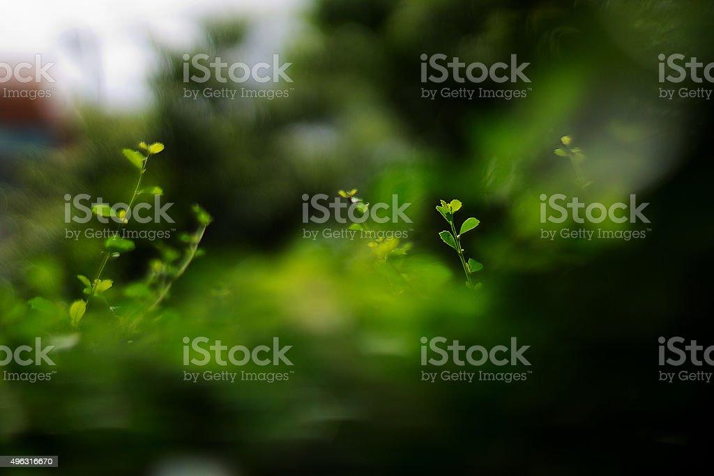 green on earth stock photo