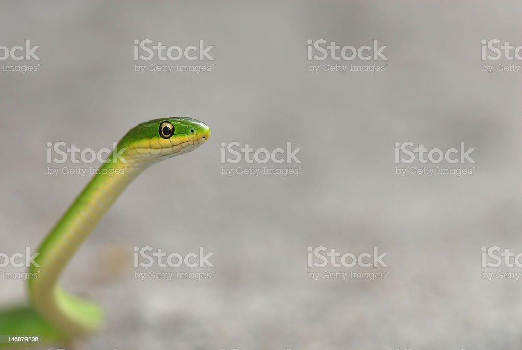 Green On Grey stock photo