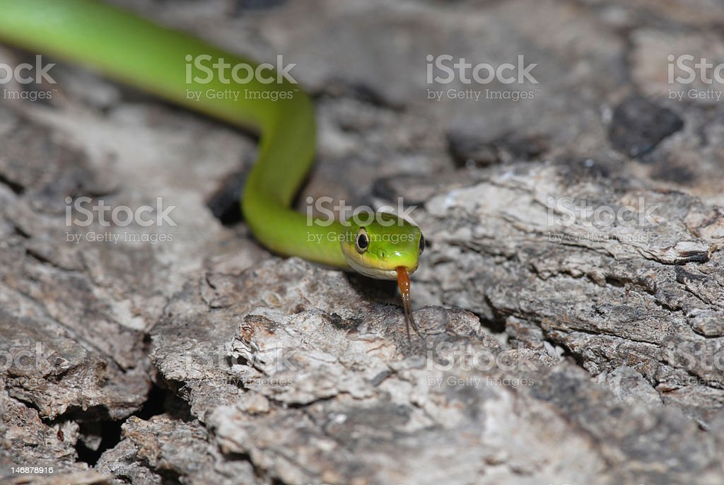 Green On The Move stock photo