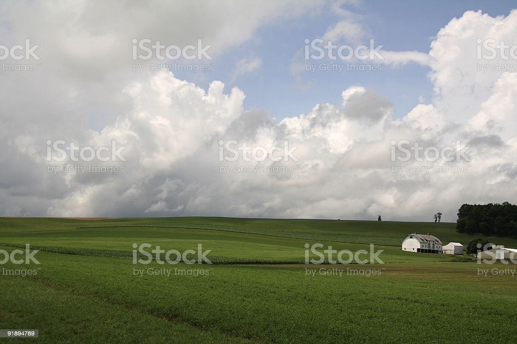 Green Open Farmland stock photo