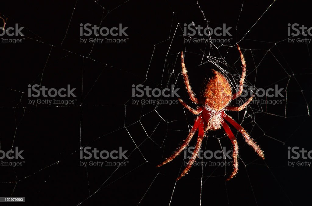 Green orb Spider stock photo