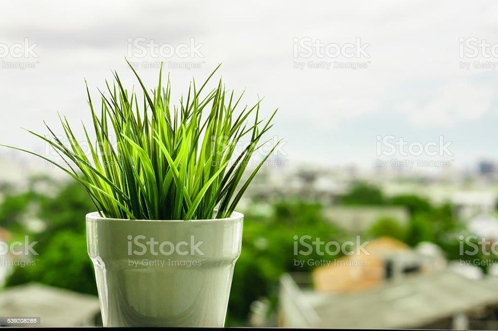 Green organic wheat grass against stock photo