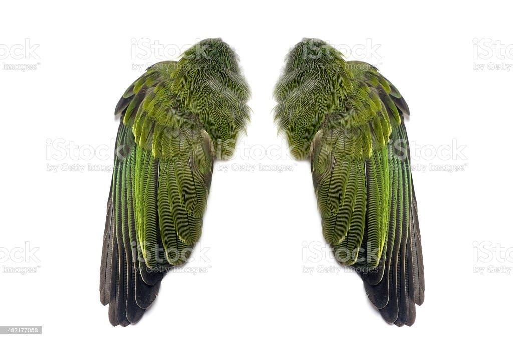 Green pair of folded bird wings stock photo