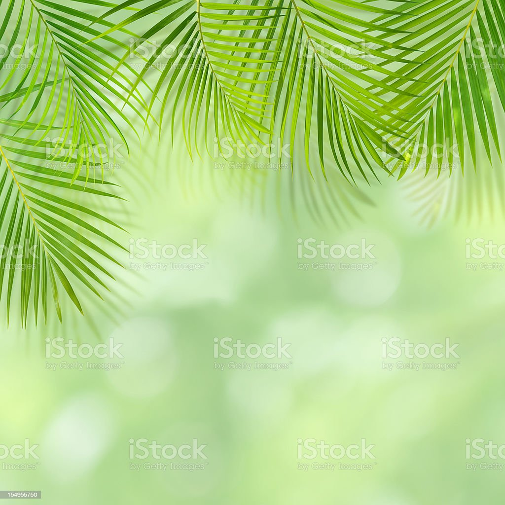 Green palm leaf background with copy space royalty-free stock photo