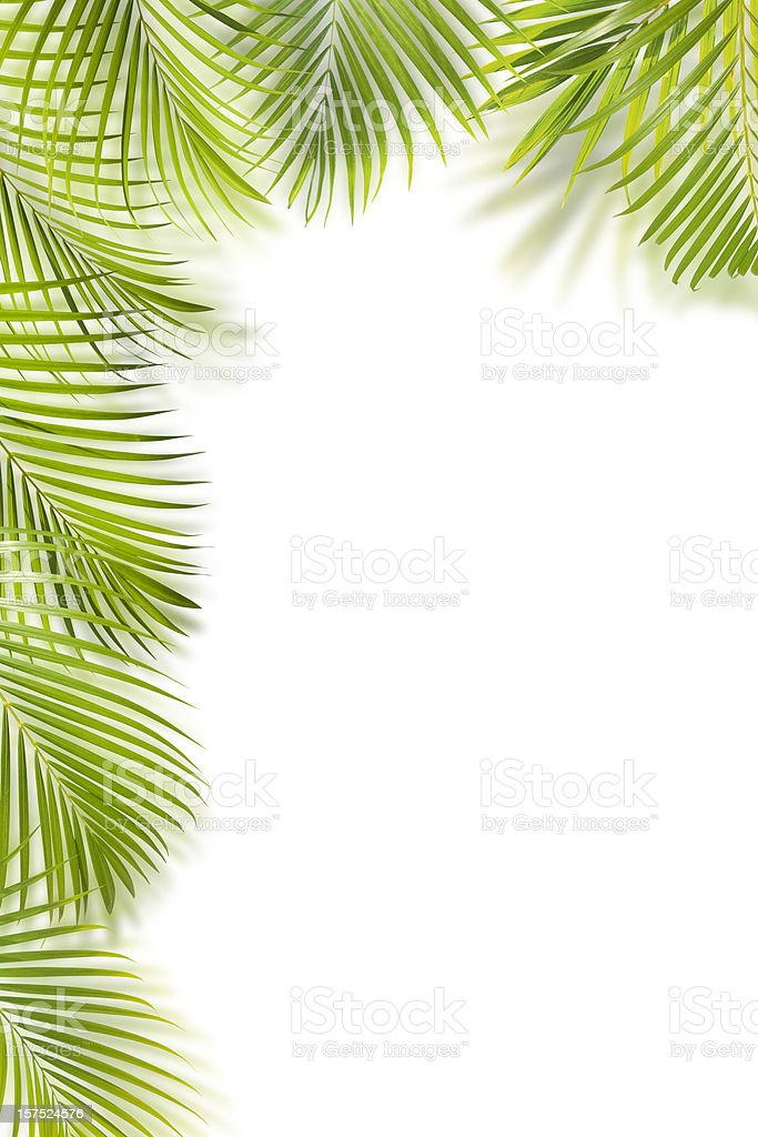 Green palm leaf frame isolated on white with copy space stock photo