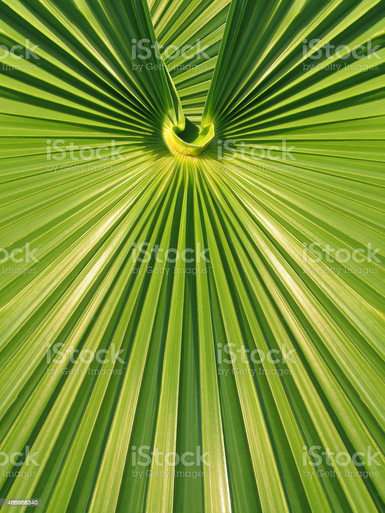 green palm leaf frond symmetrical geometric design stock photo