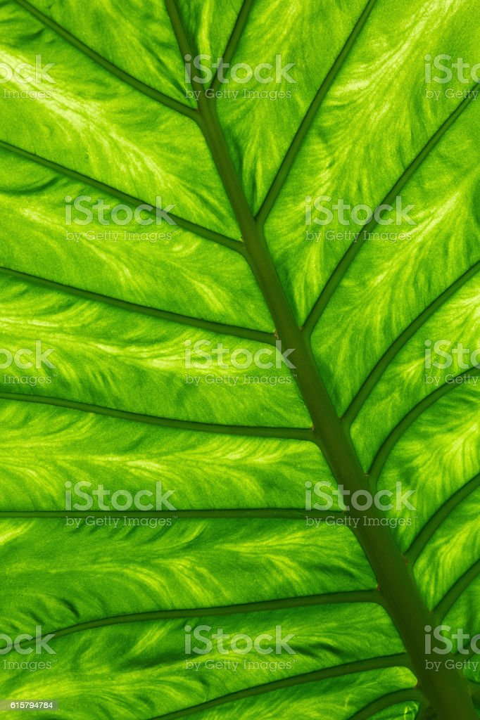 Green palm leaf on a gleam stock photo