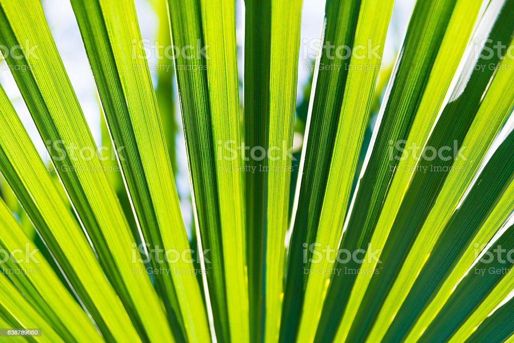 Green palm leaf stock photo