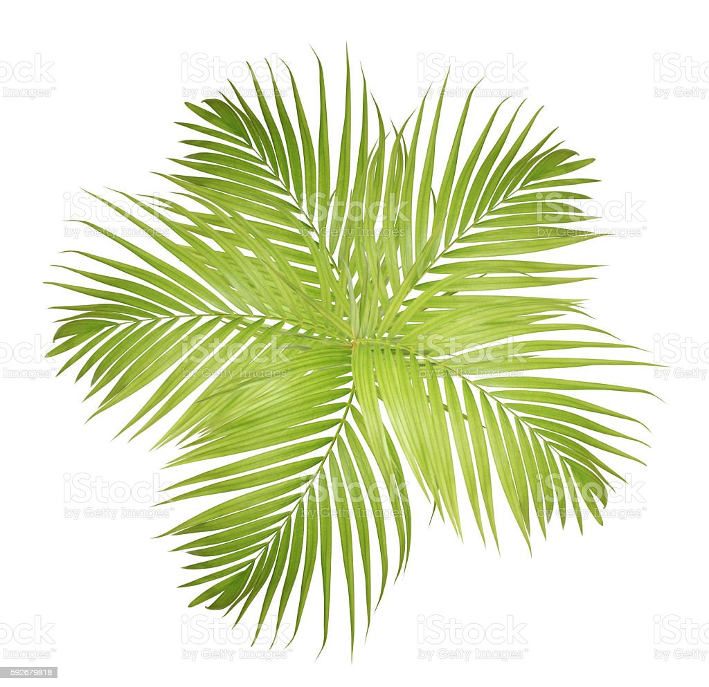 Green palm leaves frame stock photo