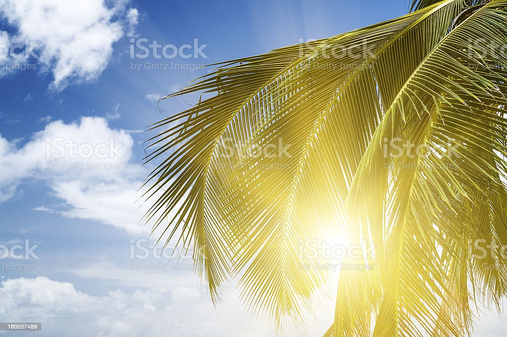 Green palm lush on blue sky background. royalty-free stock photo