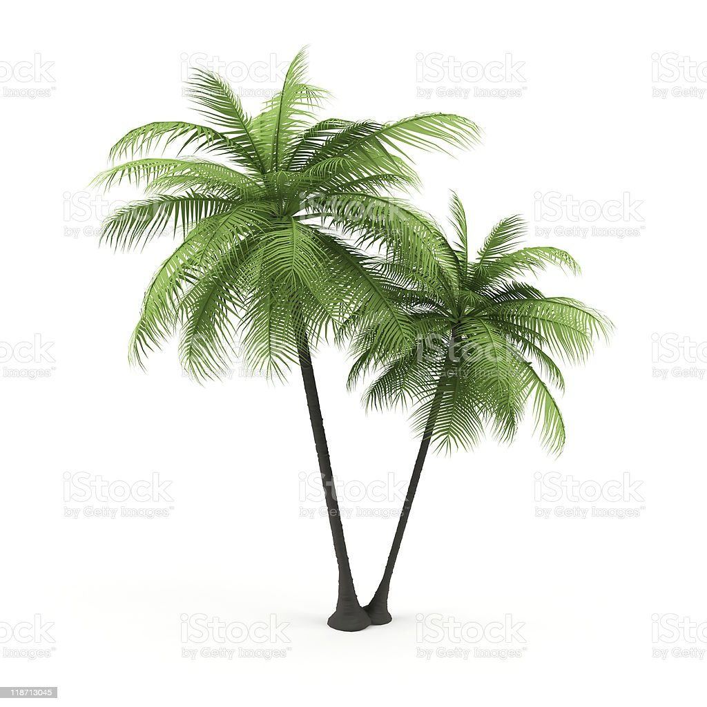 Green palm on a white background. royalty-free stock photo