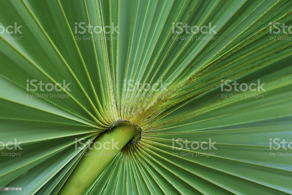 Green palm tree leaf stock photo