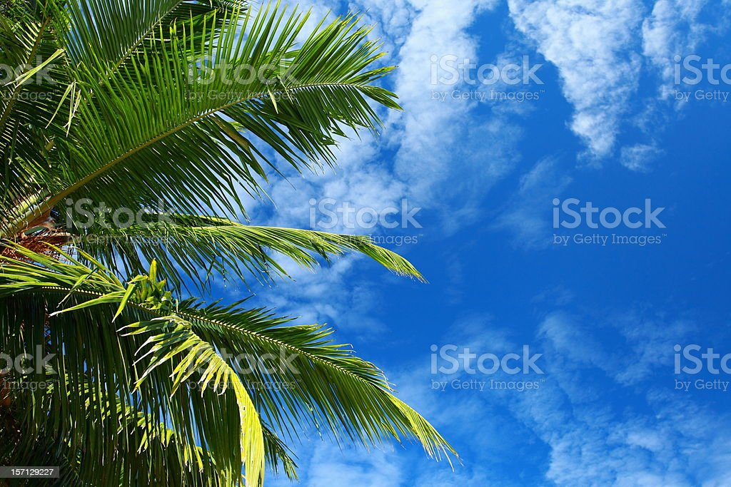Green palm tree over blue sky in Andamans Island, India. royalty-free stock photo