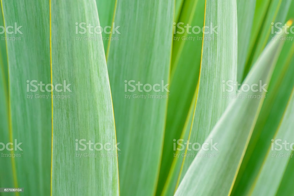 Green Palm Tree stock photo