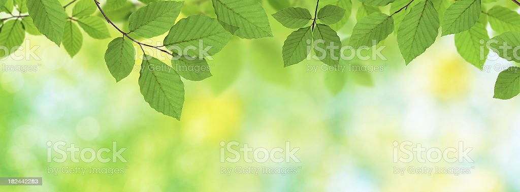 Green Panoramic Leaves royalty-free stock photo
