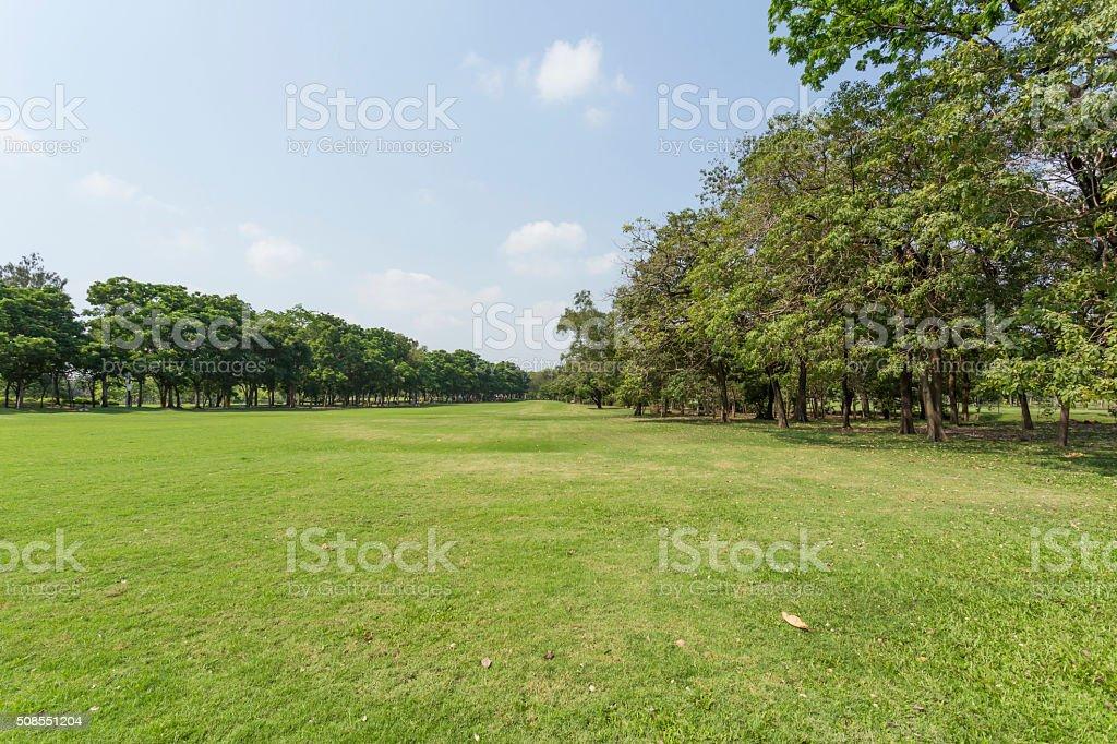 Verde Parque y el cielo foto de stock libre de derechos