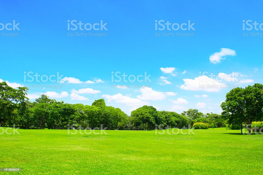 Green park and tree with blue sky stock photo