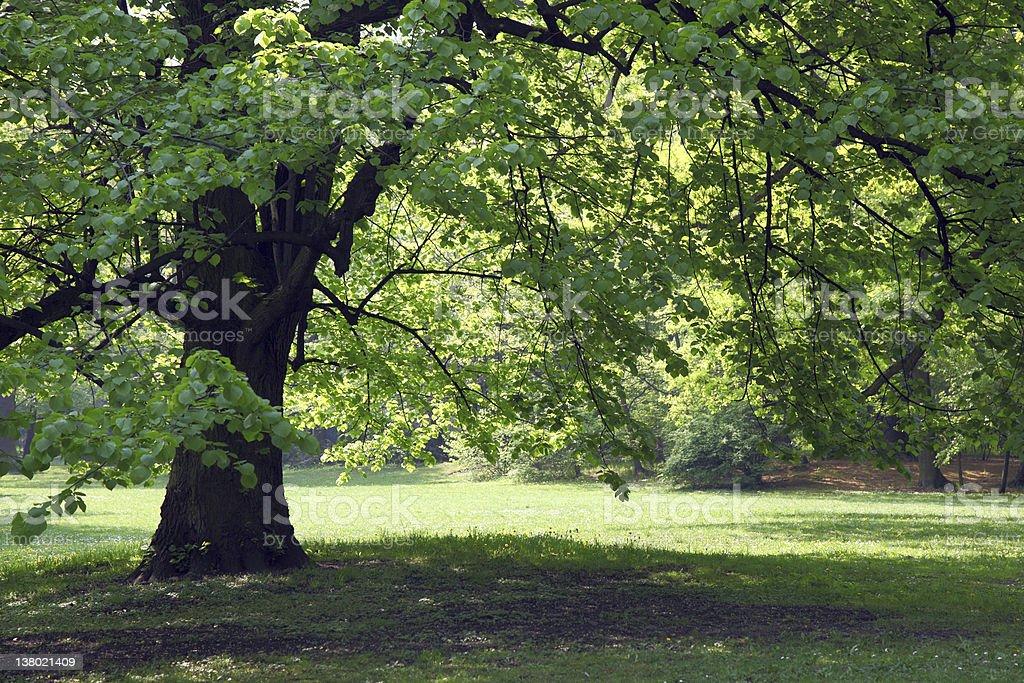 Green park stock photo