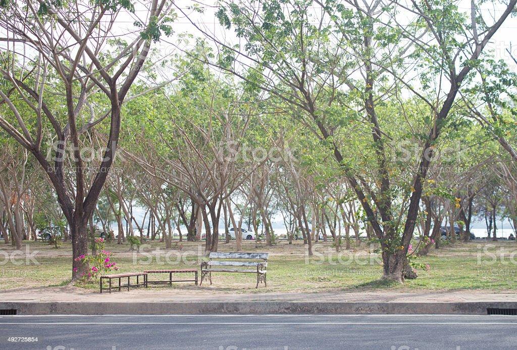 green park с зеленым скамейке Стоковые фото Стоковая фотография
