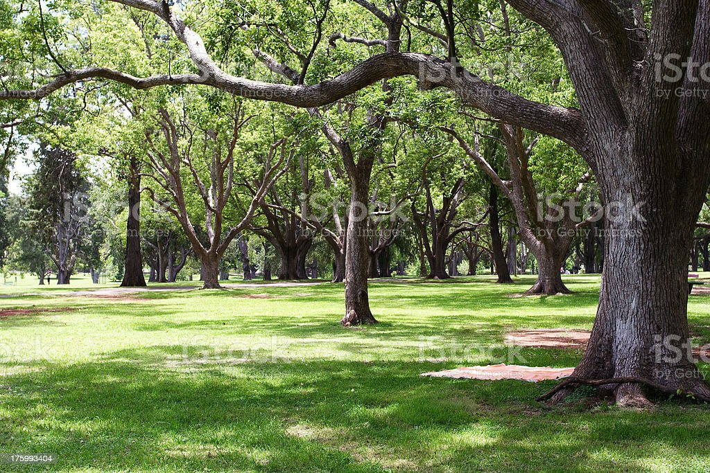 green parkland with picnic blanket layed out under tree royalty-free stock photo