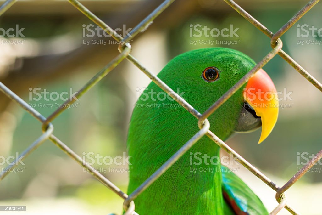 Green parrot behide cage in wild life breeding center stock photo
