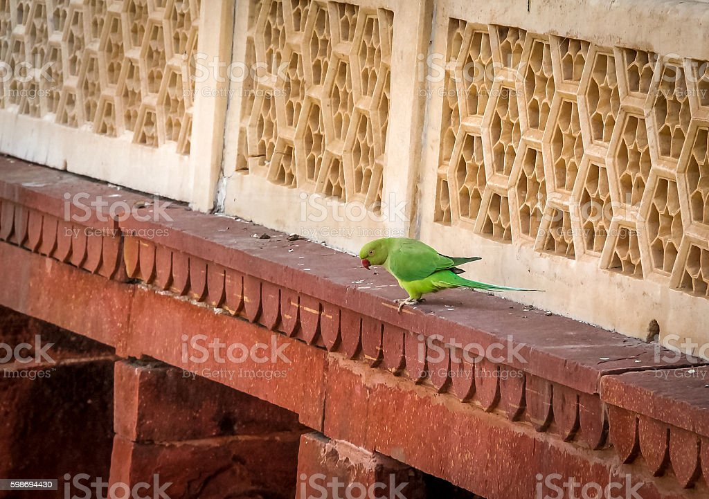 Green Parrot Bird at Agra Fort Wall - Agra, India stock photo