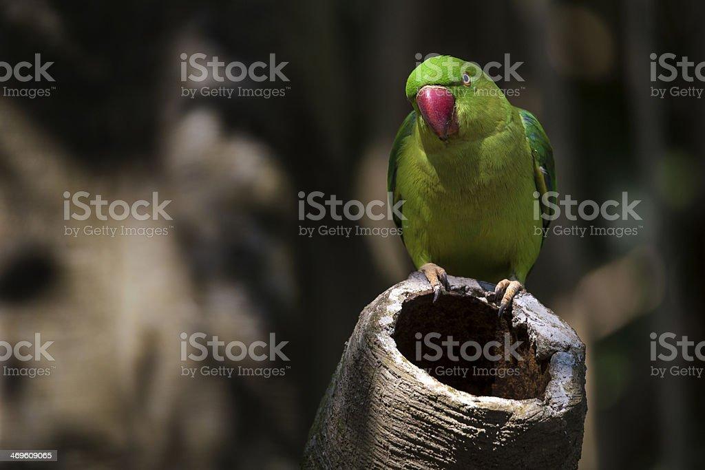 Grünen Papagei sprechen Lizenzfreies stock-foto