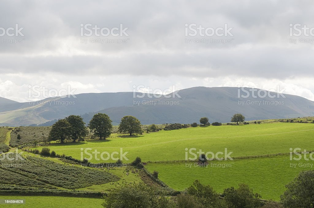 Green pasture in wales royalty-free stock photo