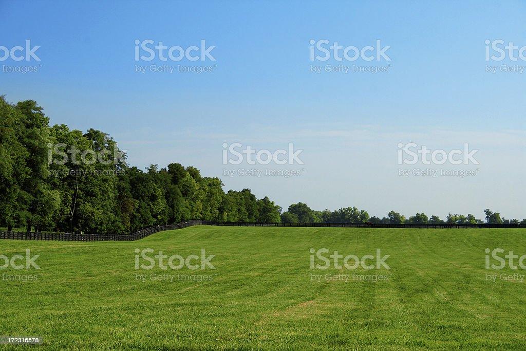 Green Pasture stock photo