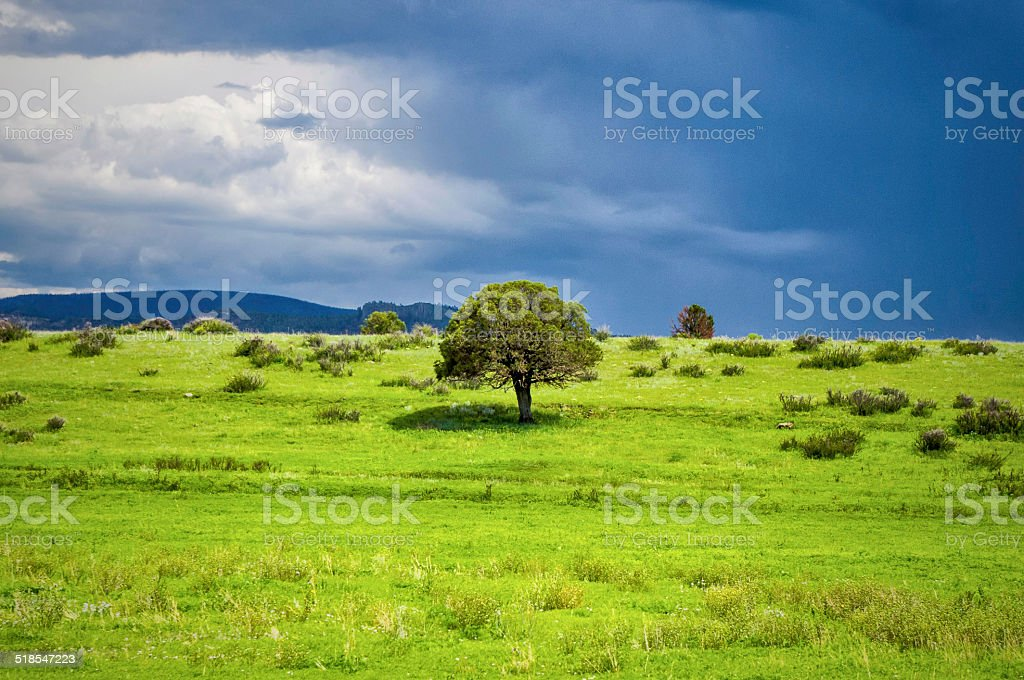 Green Pasture stock photo