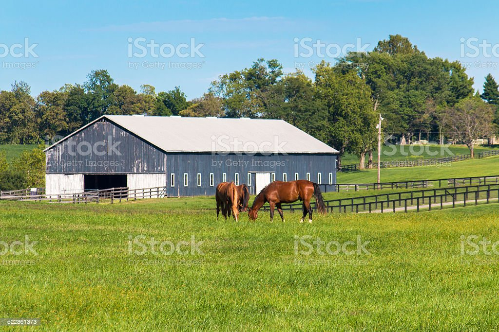 Green pastures of horse farms. Country summer landscape. stock photo
