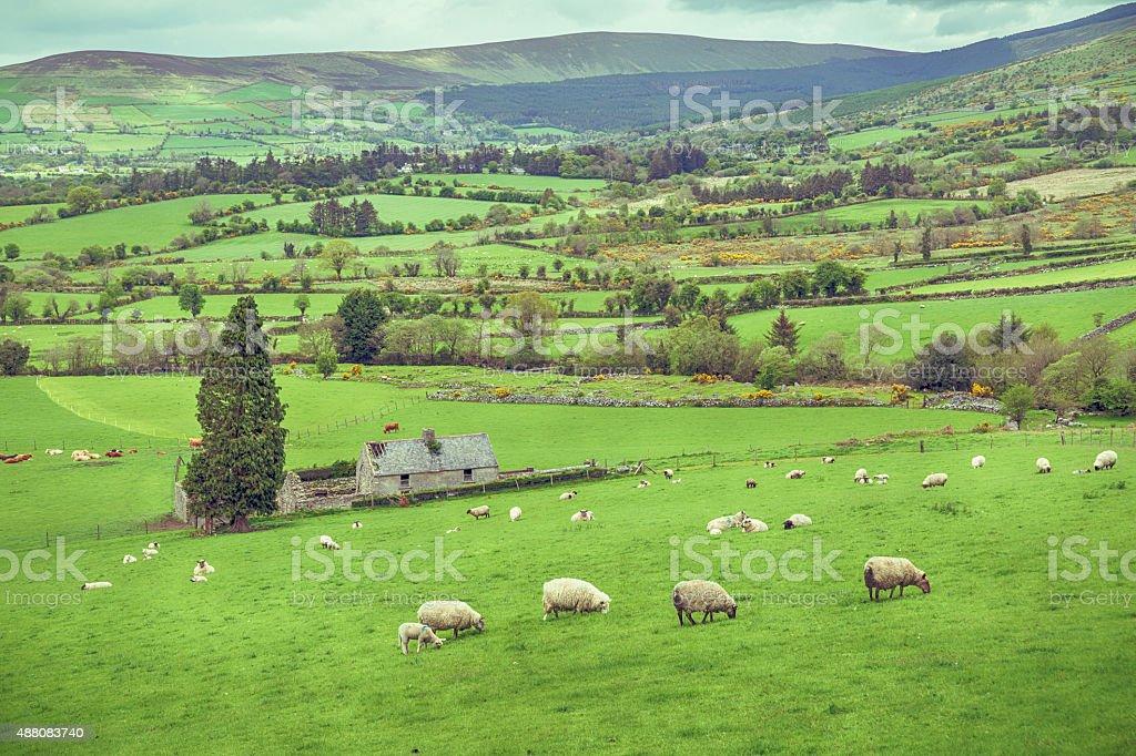 Green pastures of Ireland stock photo