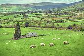 Green pastures of Ireland
