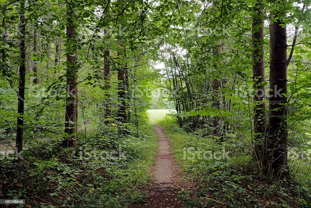 Green path stock photo