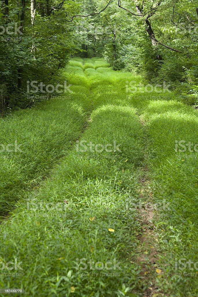 Green Pathway stock photo