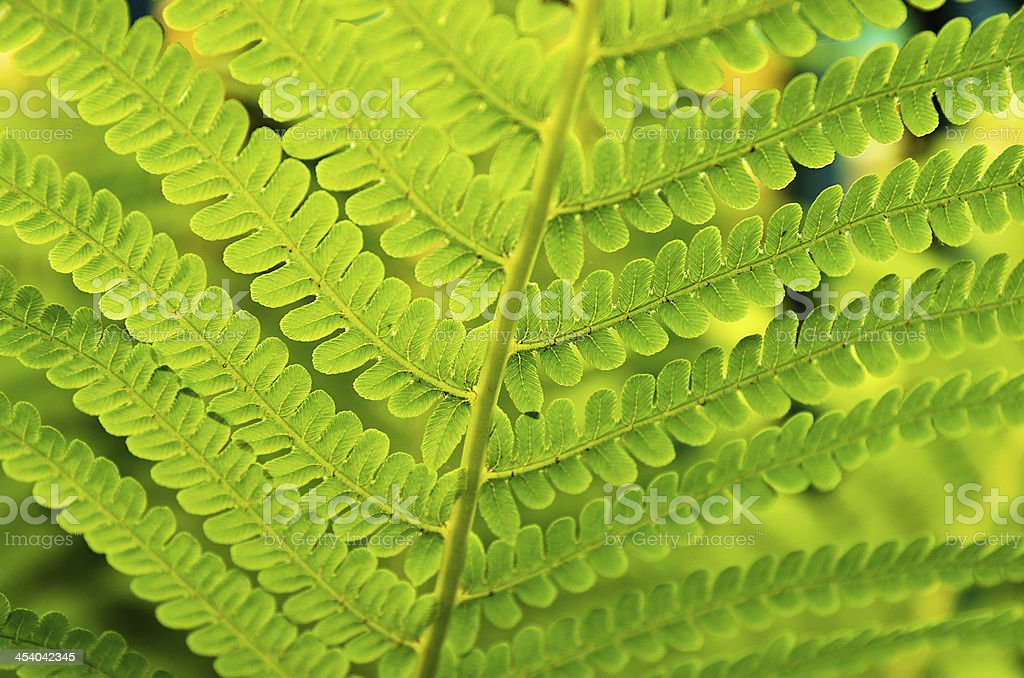 Green patterned leaf royalty-free stock photo