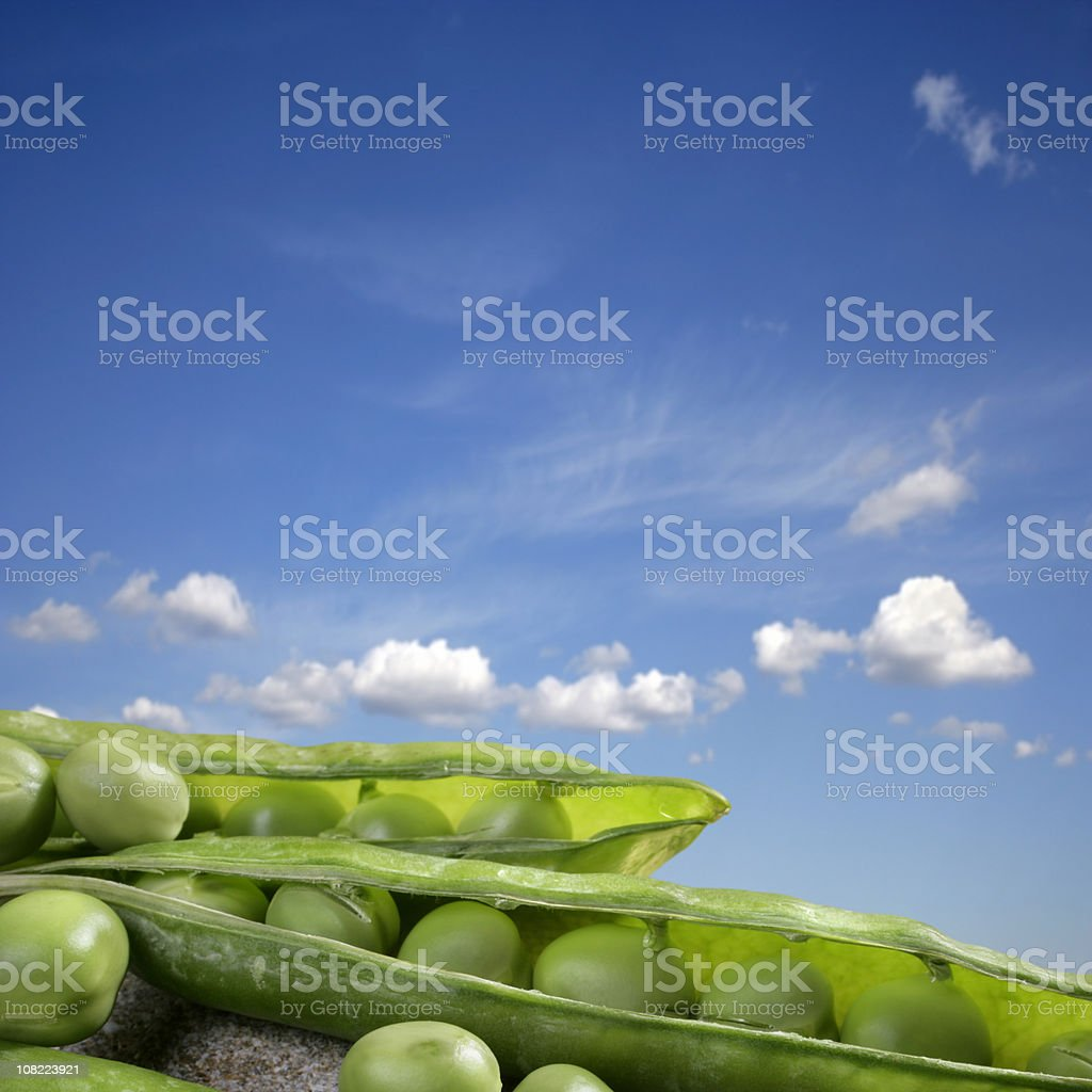 green peas against blue sky royalty-free stock photo