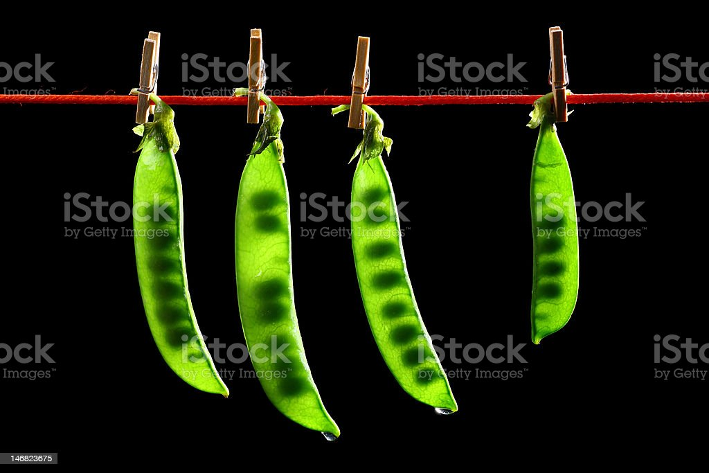 green peas in a pods royalty-free stock photo