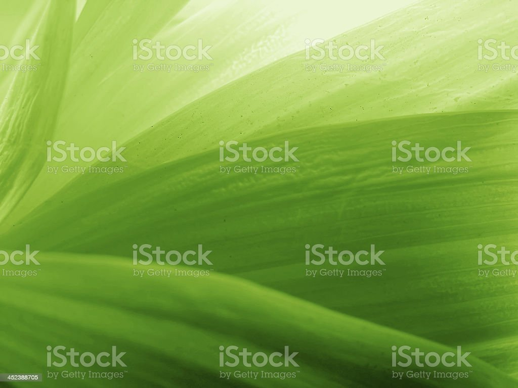 green petals stock photo